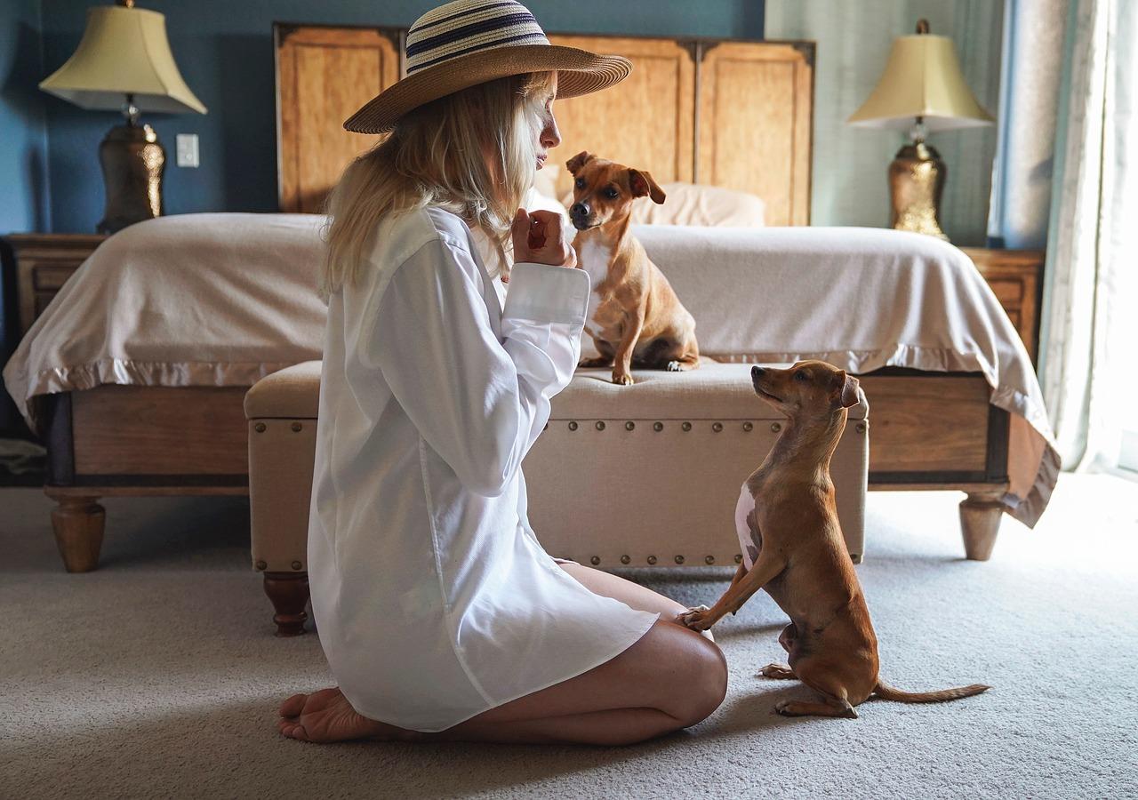 adopter chien coup de coeur