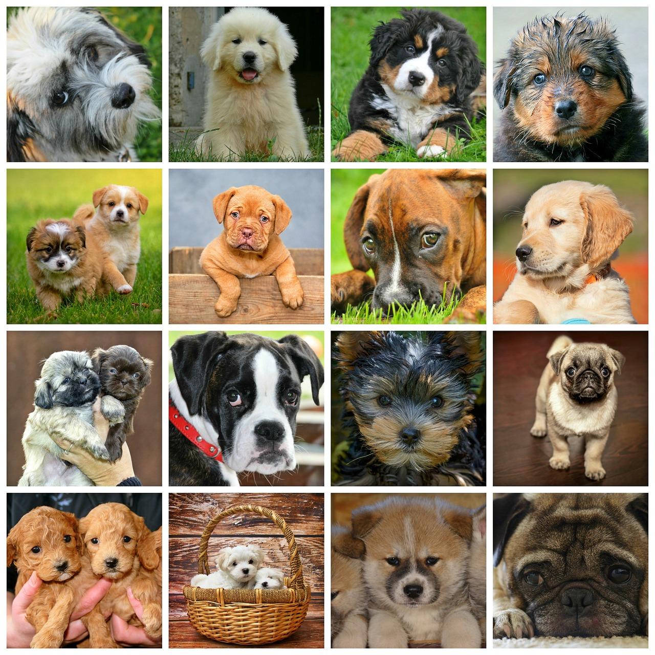 quelle chien adopter