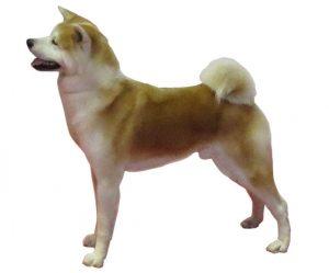 Akita Inu Tout Savoir Sur Cette Race Dogsplanet Com