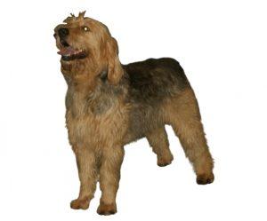 otter dog