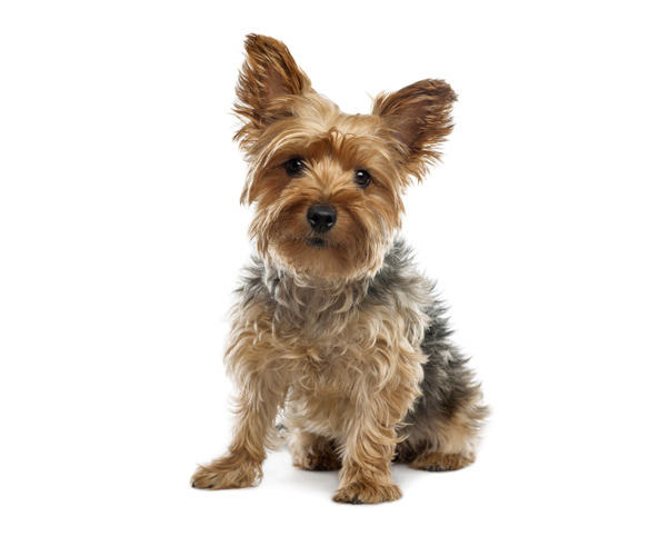 Hrănirea câinilor și a cățelușilor - Mundo Perros | Dogs World (Pagina 2)