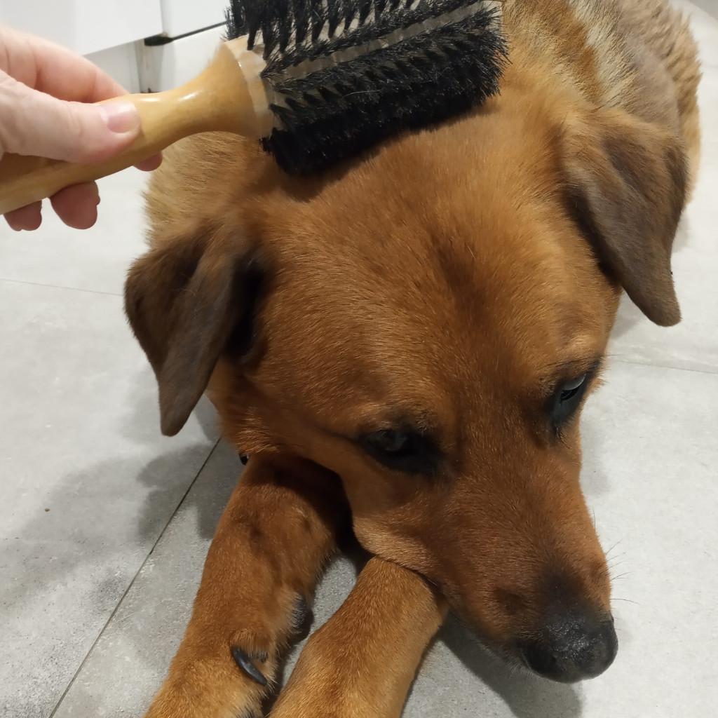 soins et entretien chien