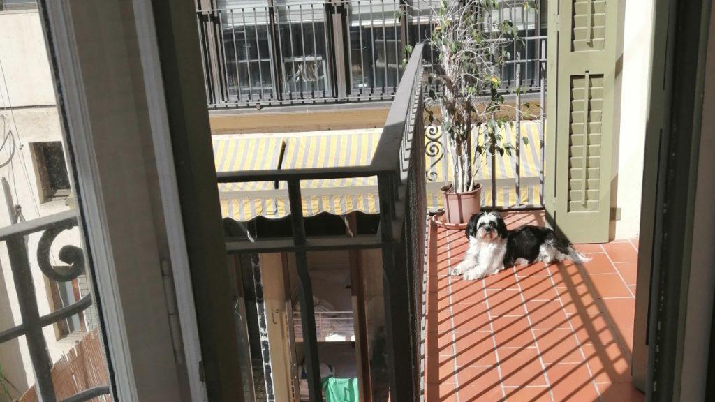 chien d'appartement
