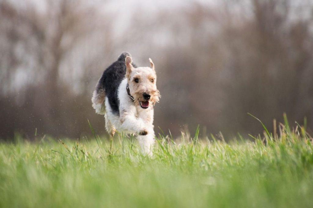 Clôture électrique pour chien comparaison
