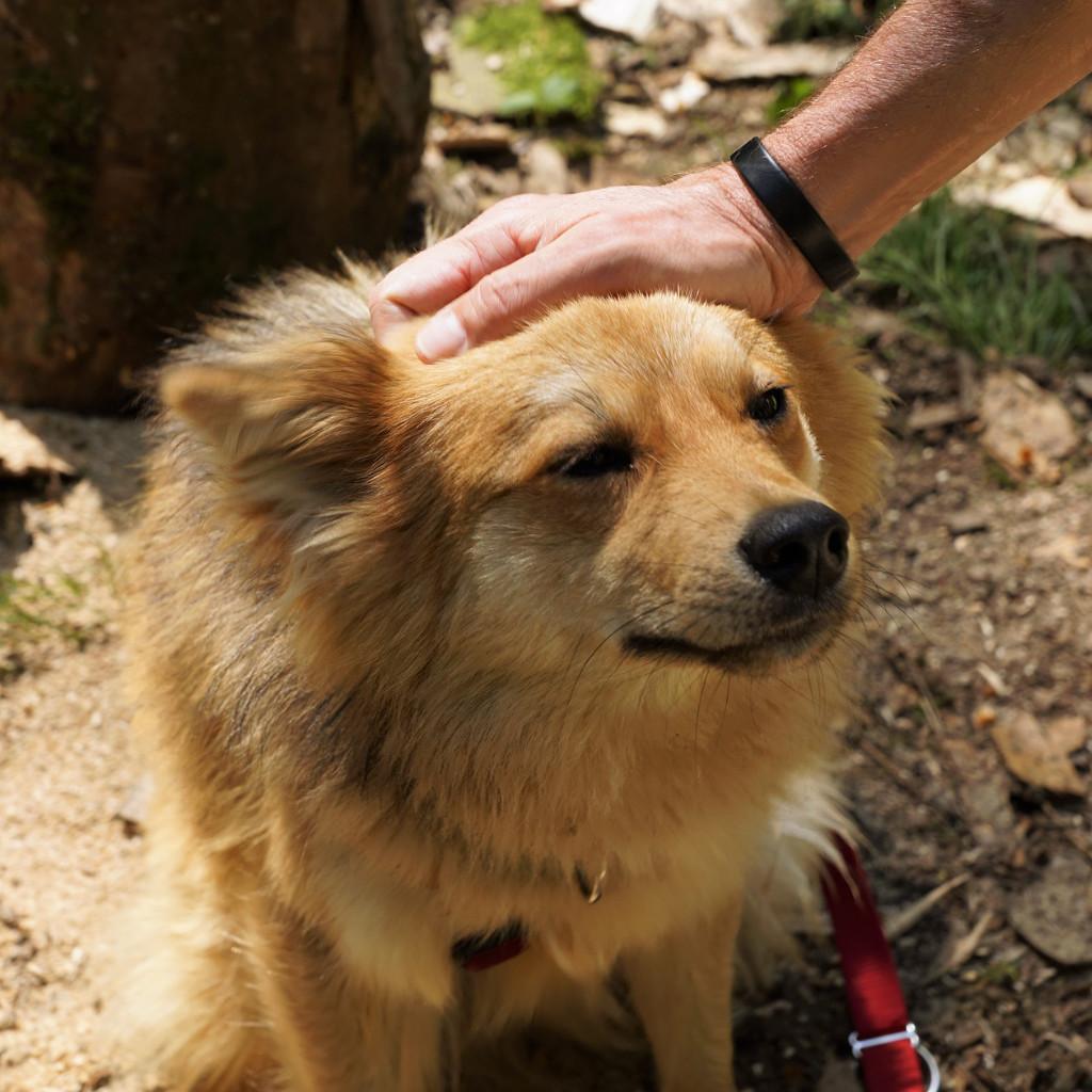 dossiers chien éducation