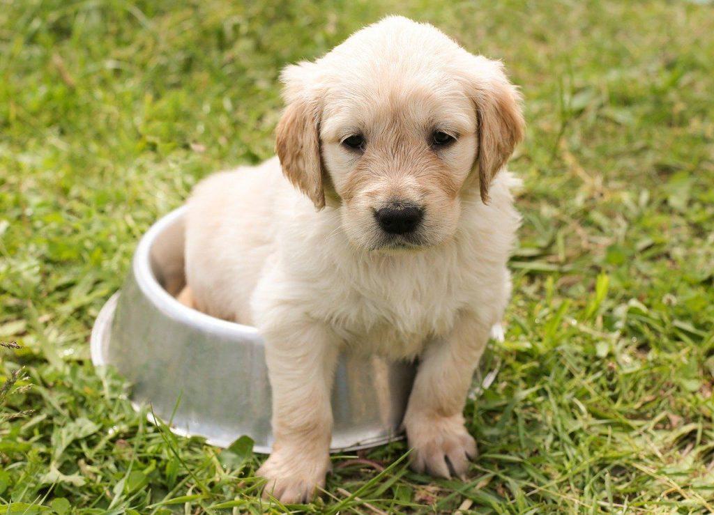 dog diet growth