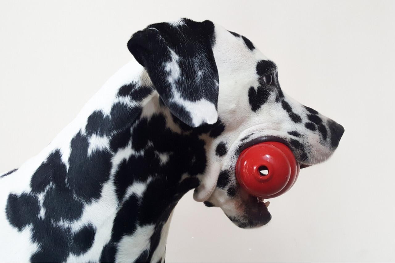 kong chien