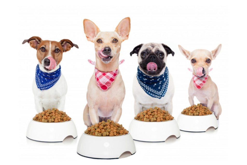 Top 5 des meilleures croquettes pour chien
