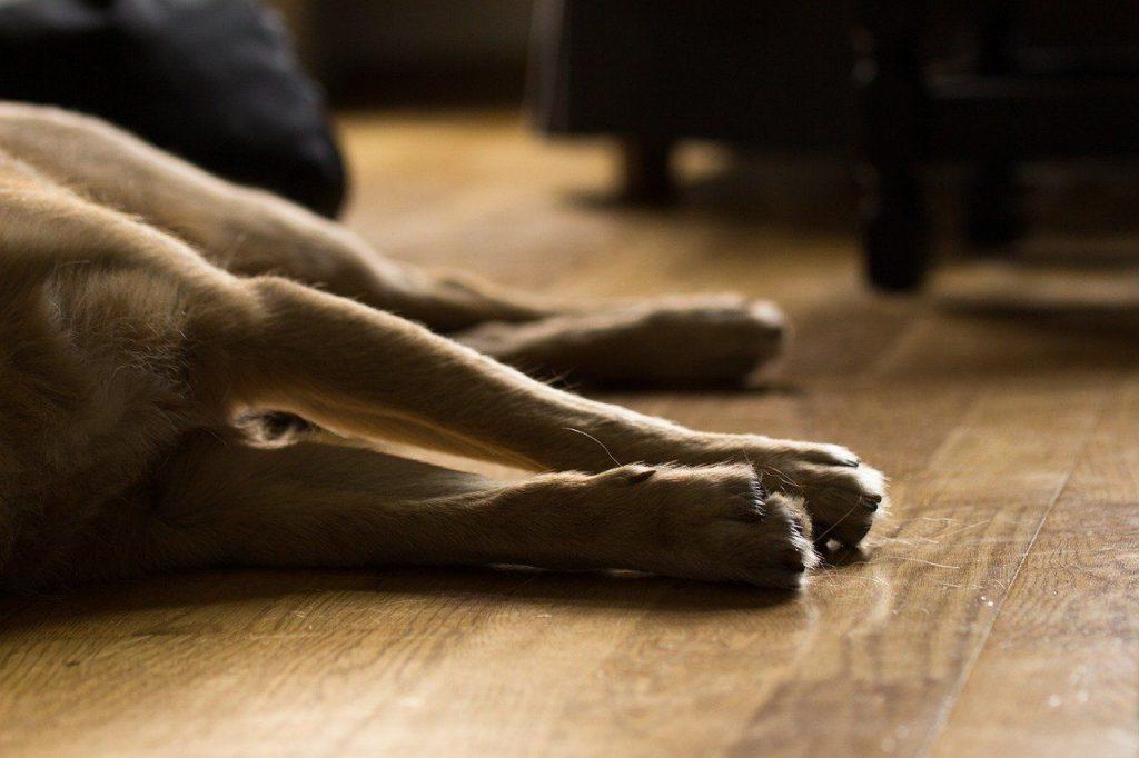 mort du chien euthanasie