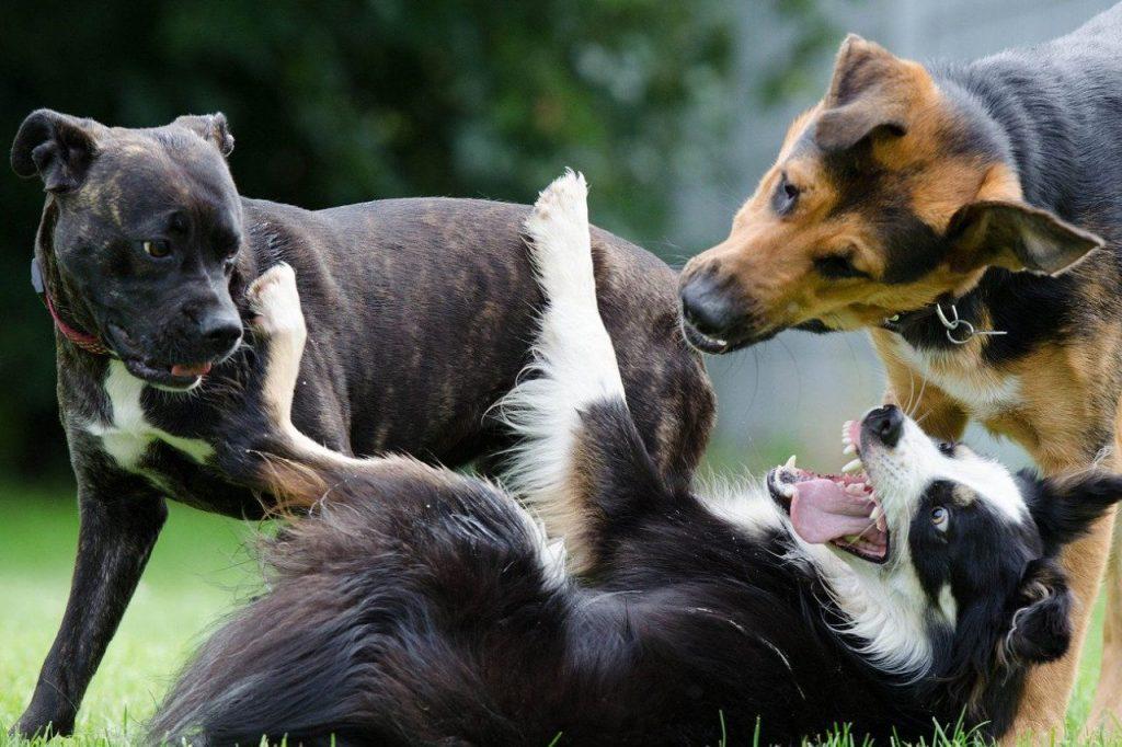 vices cachés chien