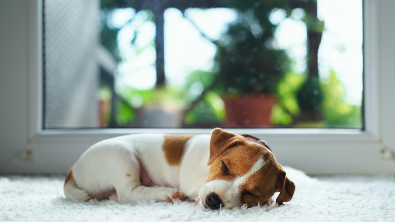chien-coronavirus-confinement-etude