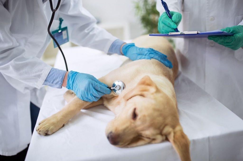 auxiliaire de santé animale asa