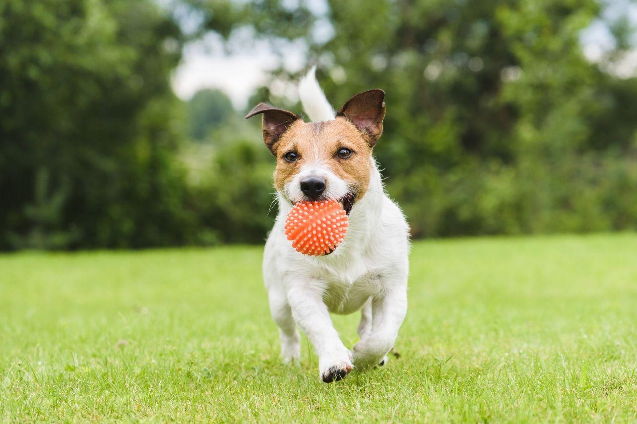 accesorios perro recién adoptado