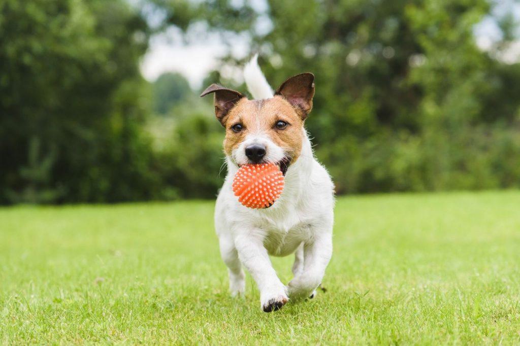accessoires chien adopte
