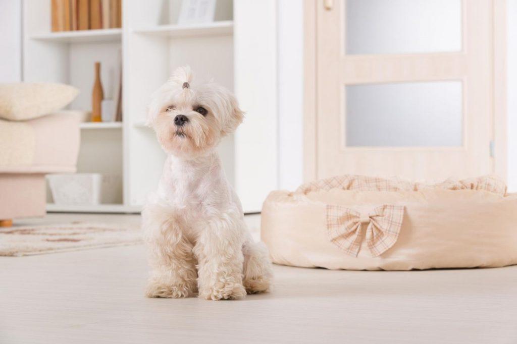 adopter petit chien
