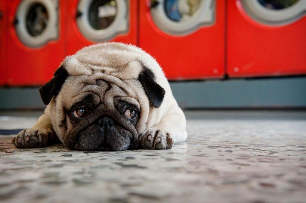 comment rassurer un chien qui a peur