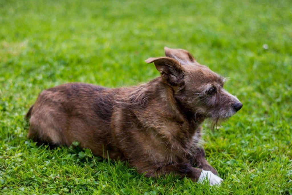 désinfecter plaie chien