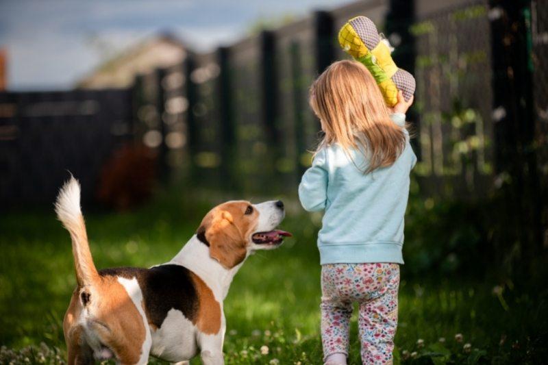 beagle dog for kids