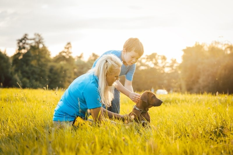 dogs that are good with kids
