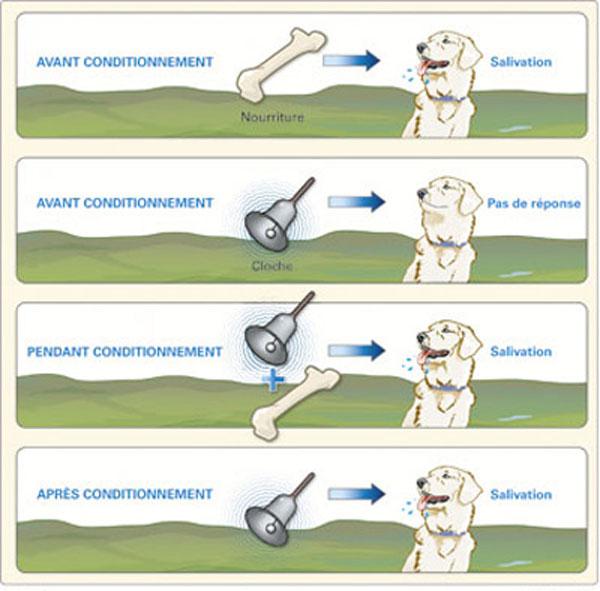 experience pavlov chien