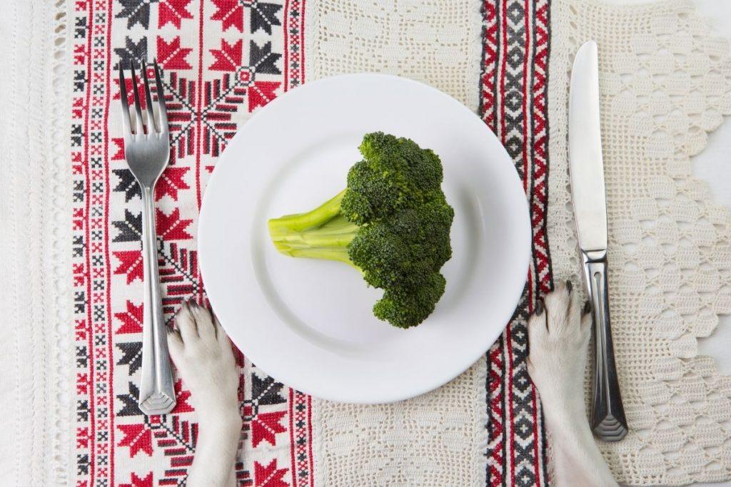 legumes chien