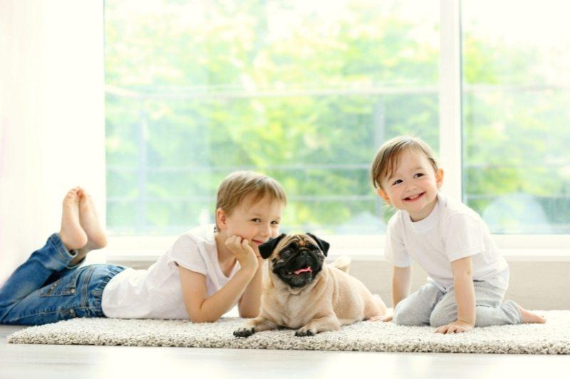 pug dog kids