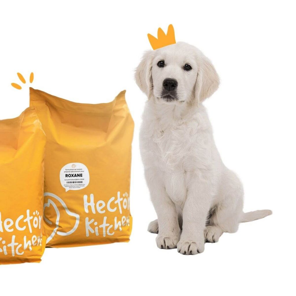 hector kitchen croquettes chiot