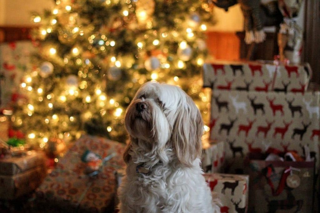 idees cadeau noel chien