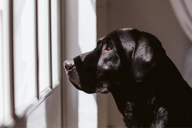 chien qui pense