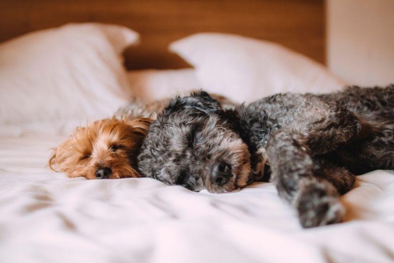 dog sleeping in bedroom