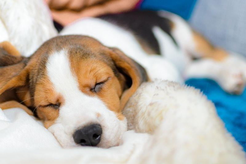 donde dormir cachorro 3 meses