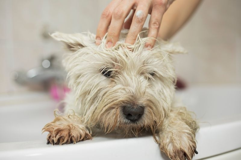 how to wash a dog