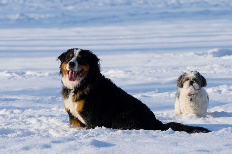protection coussinet chien neige