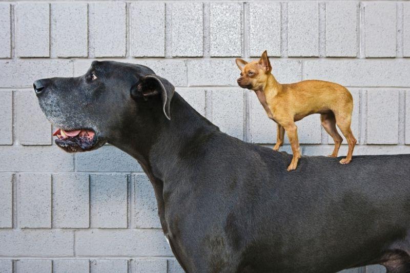 sistema digestivo perro