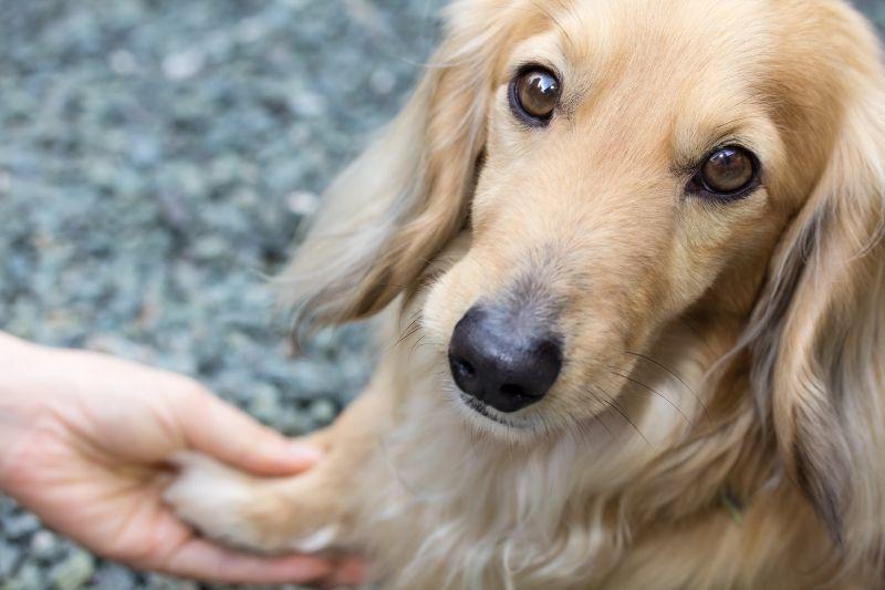 deuil d'un chien combien de temps