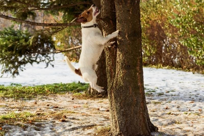 dog chasing squirrels