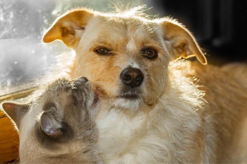 introducing dog to cat