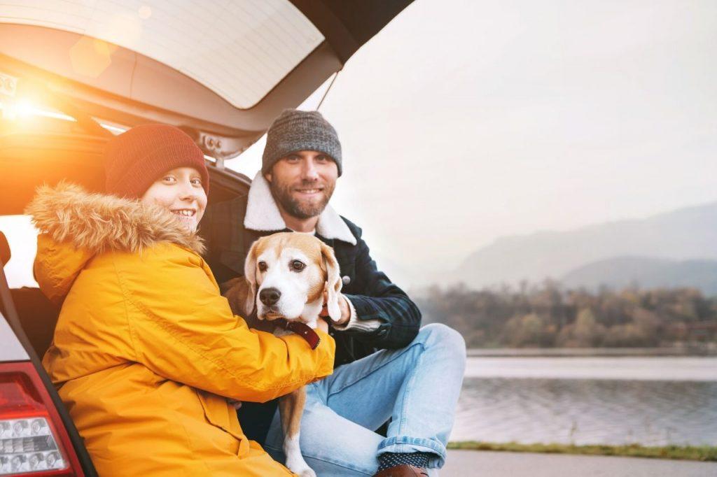 tips travel car dog