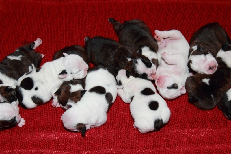 questions to ask when getting a puppy