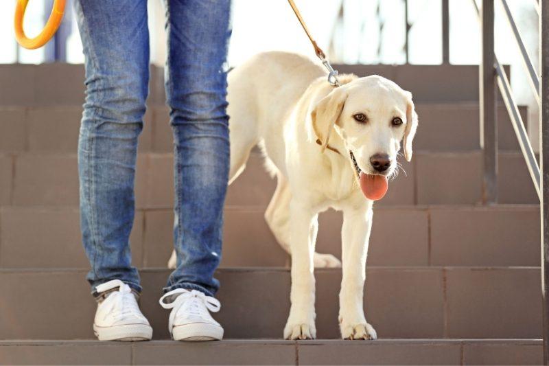 avantages chien santé