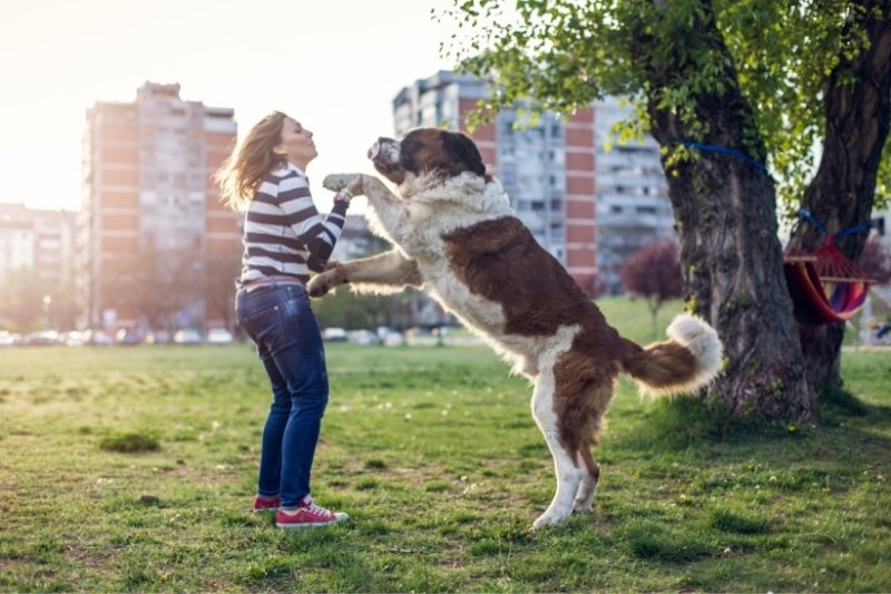 dog standing command
