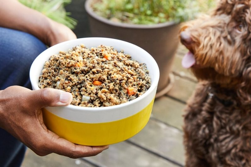 home delivery dog food petplate
