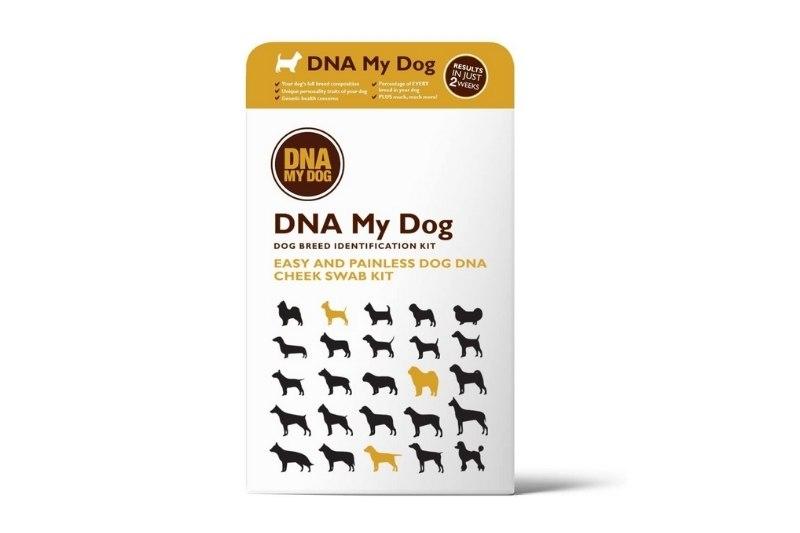 dna my dog test
