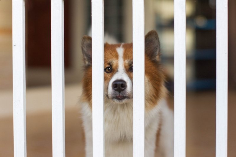 small fence for dogs