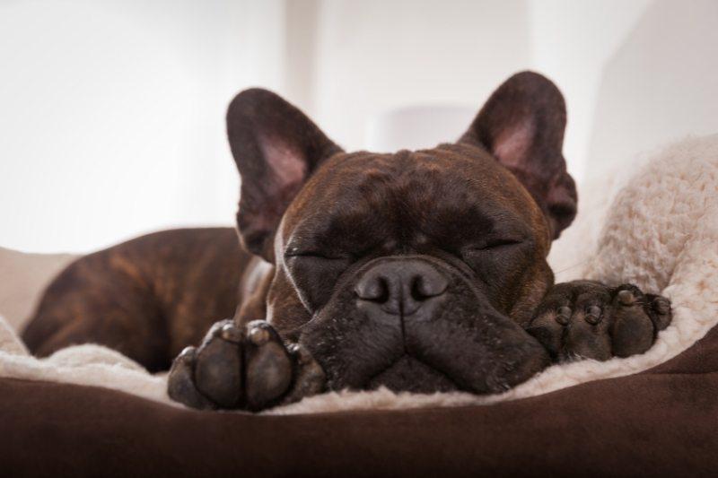 dog sleeping all day